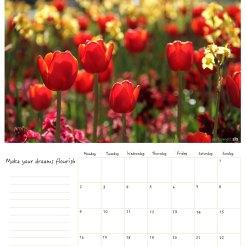 May / Mayo
