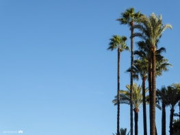 Palmtrees in Seville